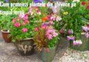 Cum protejezi plantele din ghivece pe timpul iernii