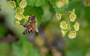 Albina polenizand flori.